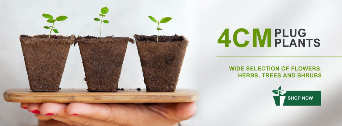 4cm Plug Plants